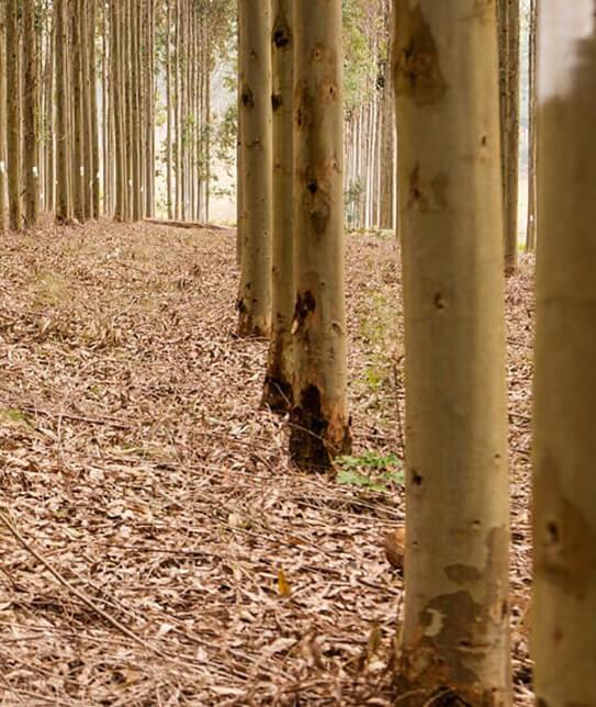 haas-floresta001
